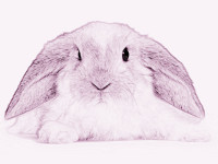 poetry-of-rabbits-1