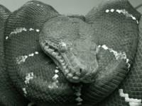 snake-poems-1