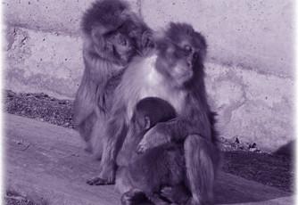 monkey poem