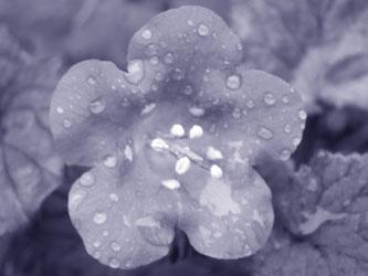 rain-poems-1