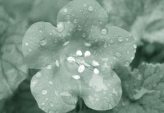 rain-poems-2