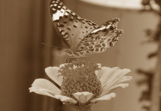 butterfly-poems-2