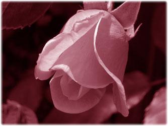 Soulmate Poems Shadow Of Iris