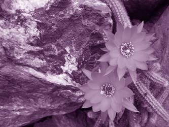 desert-poems-2